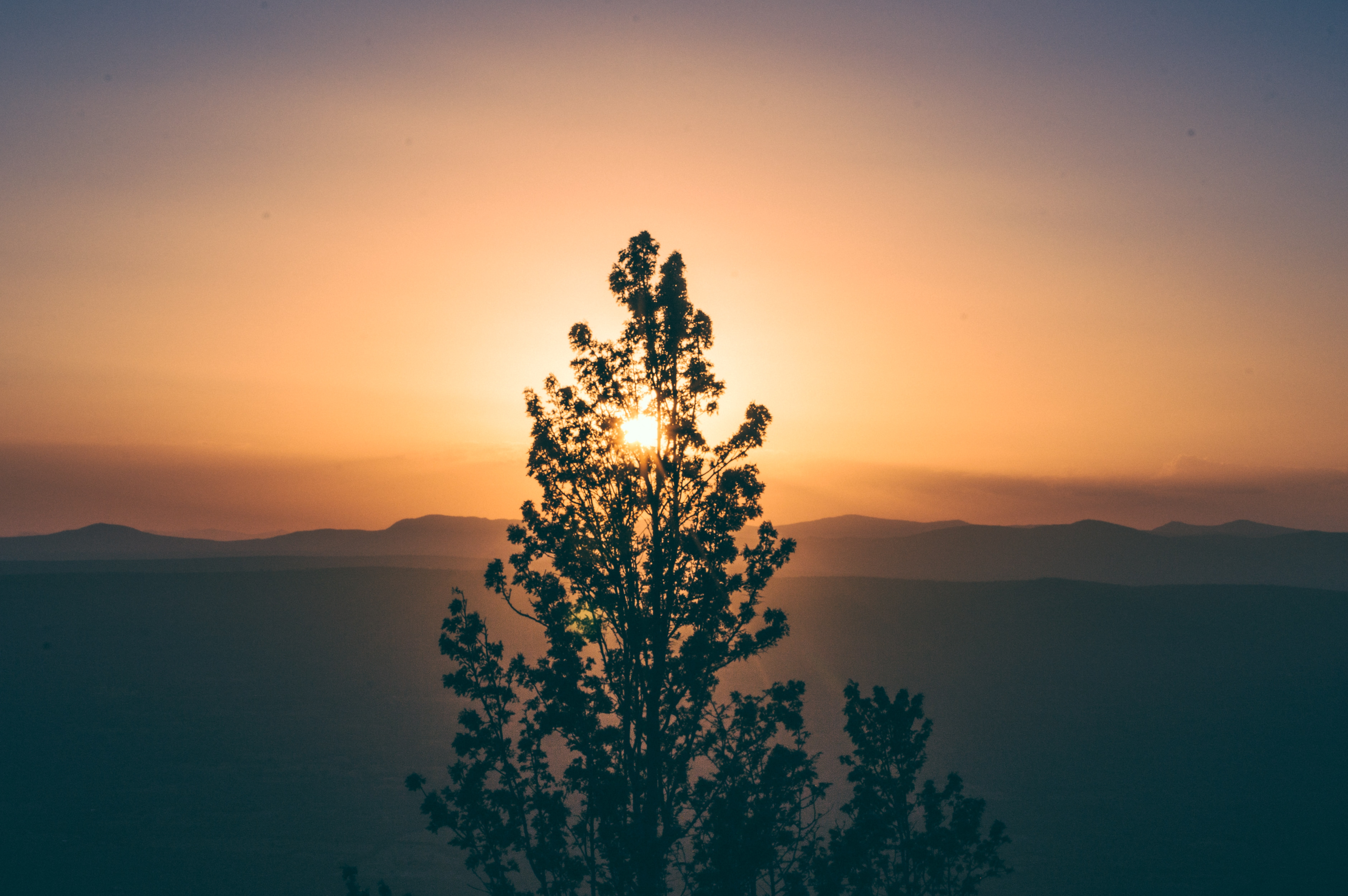 silhouette photo of tall green tree in front of sunrise