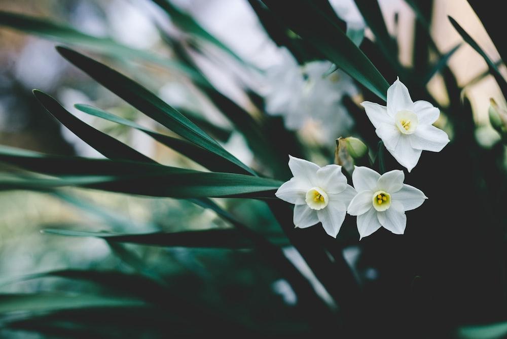 white petaled flowers during daytime