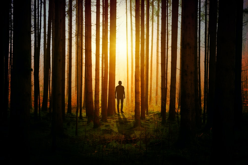 silhouette of man inside the forest during dusk