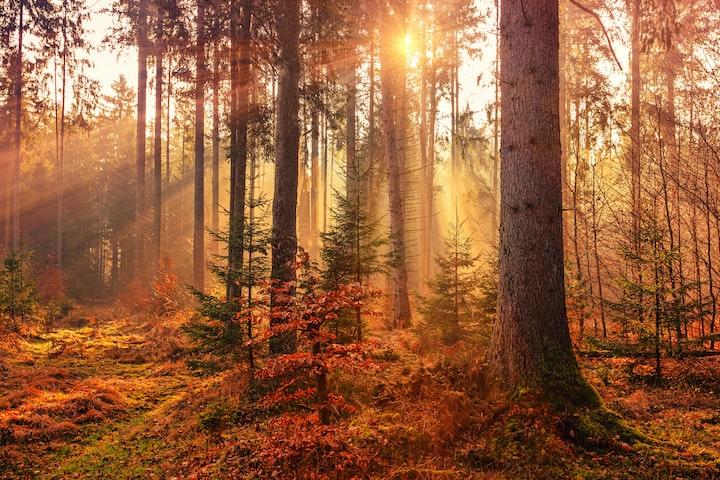 Arborist world of trees