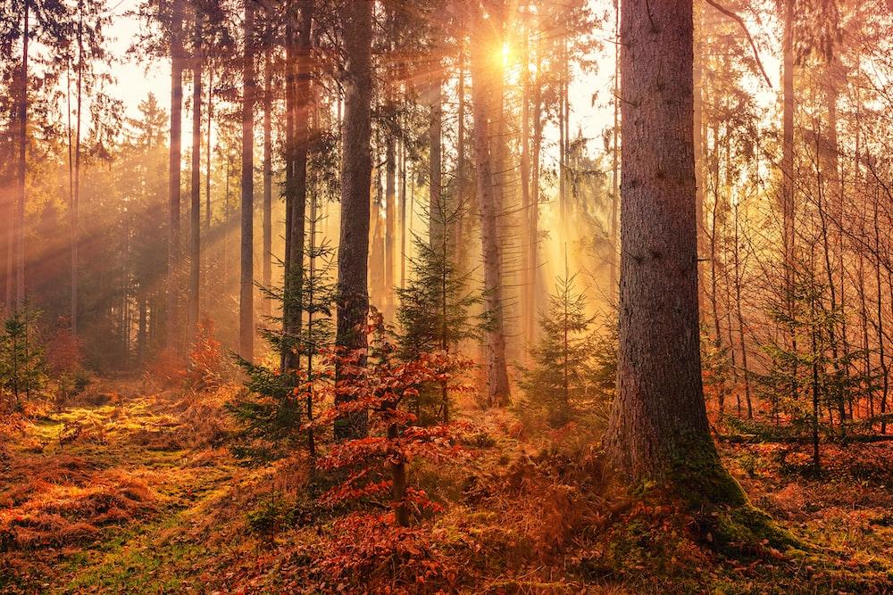 forest heat by sunbeam