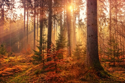 forest heat by sunbeam autumn teams background