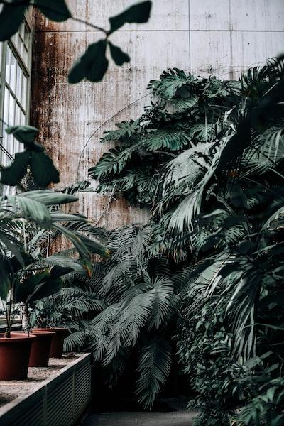 several plants inside green house