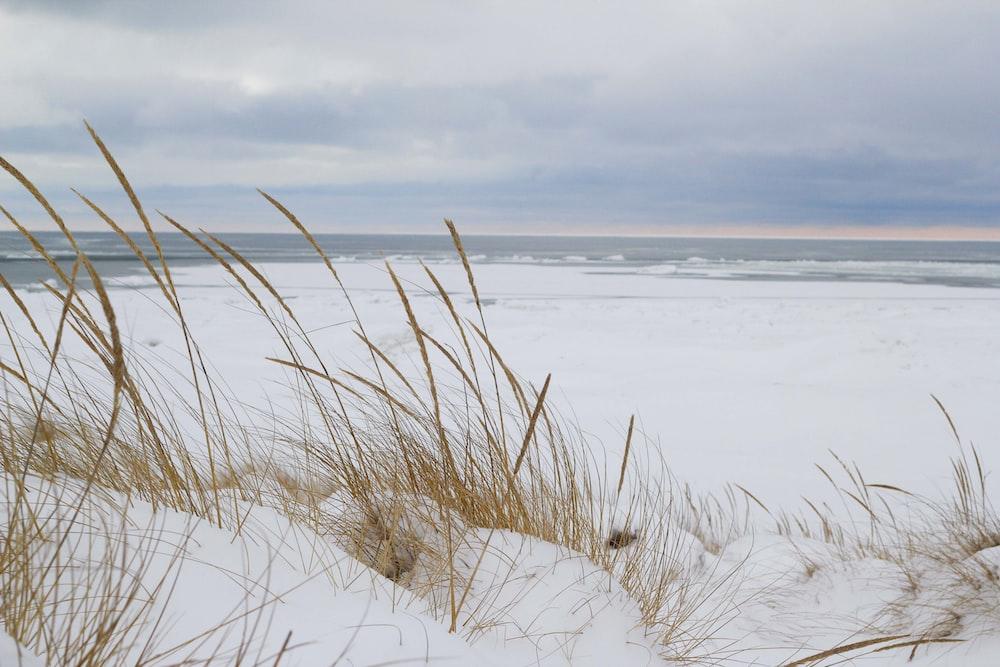 brown grass near sea shore