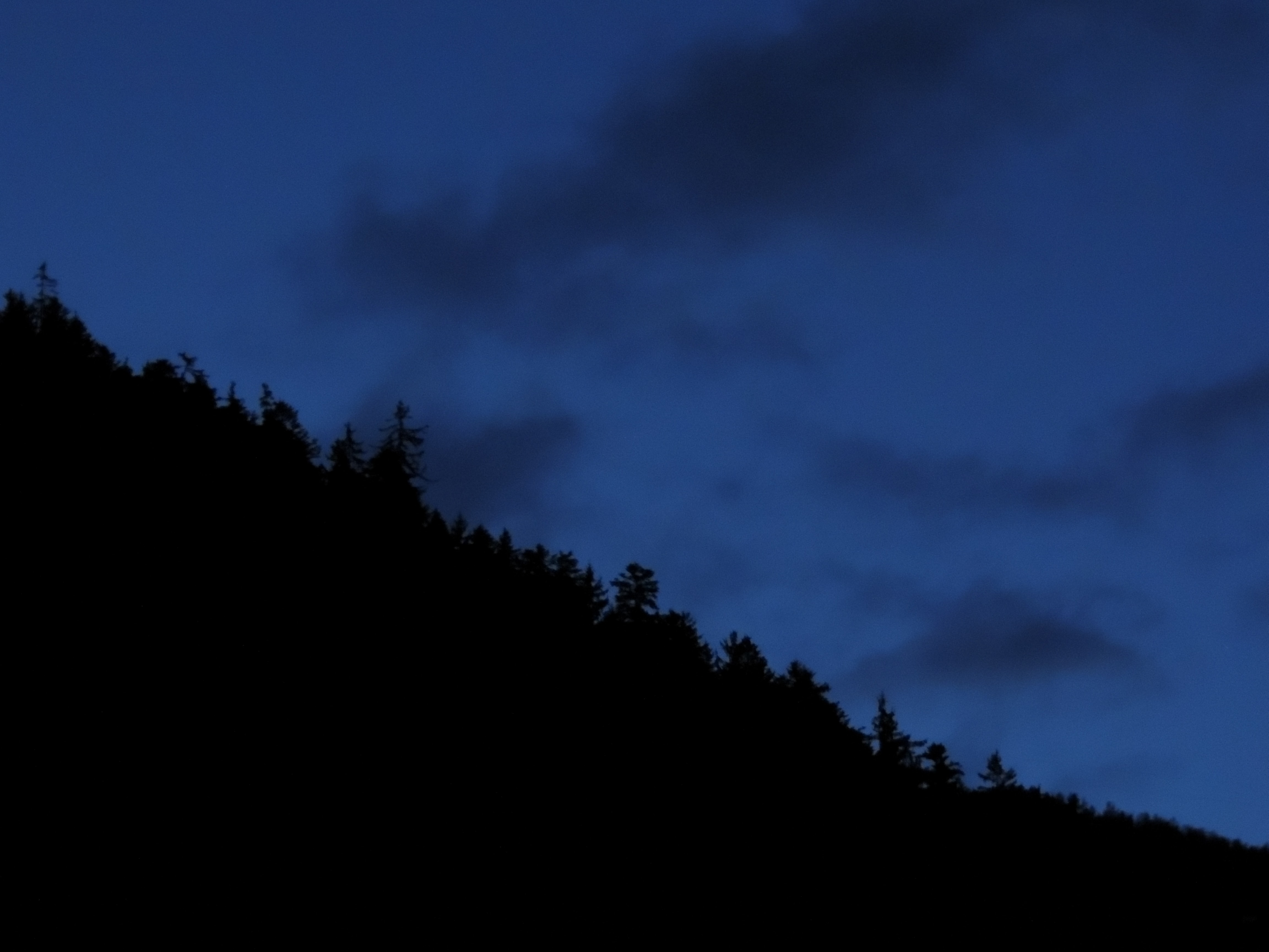 silhouette photo of trees on hill