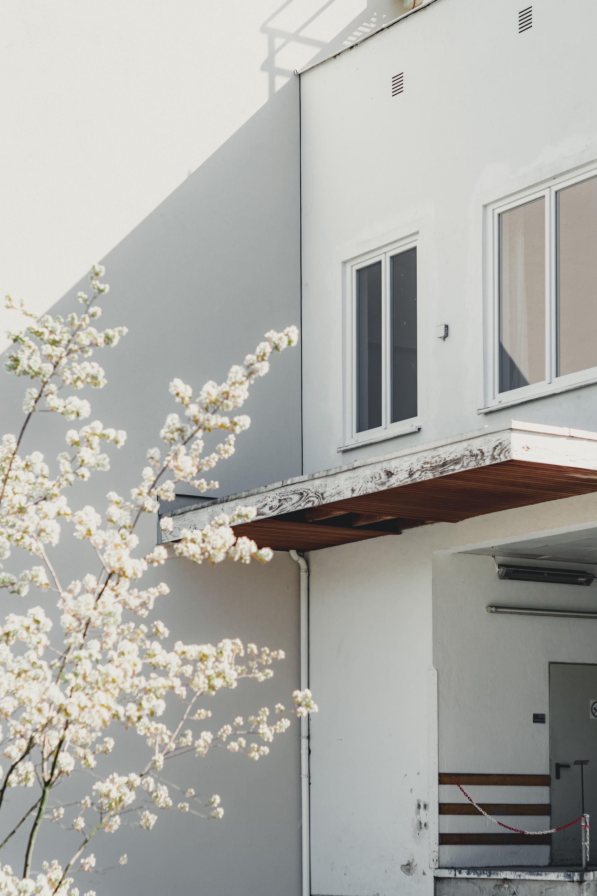 white cherry blossom tree near high-rise building