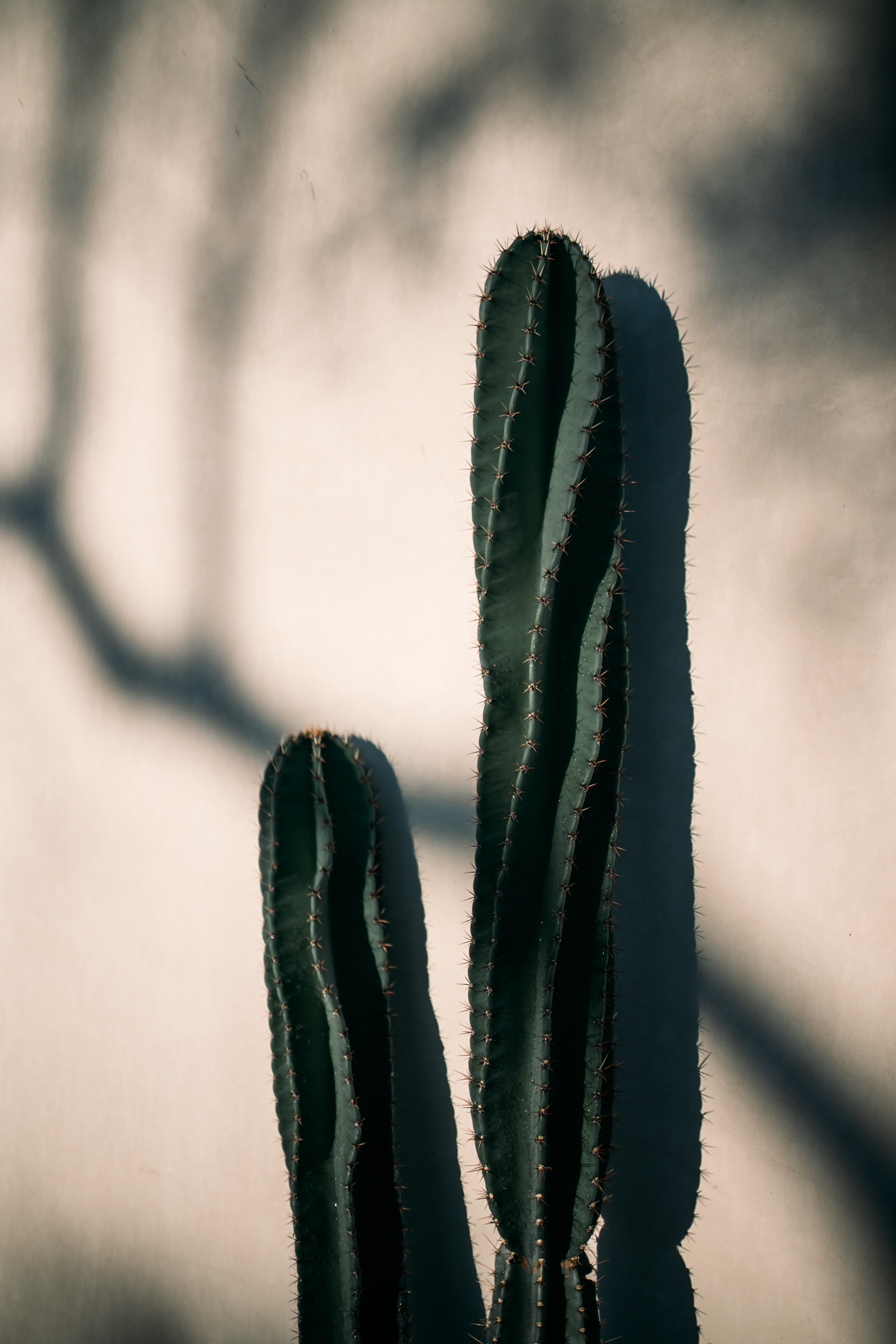 cactus plant beside beige wall