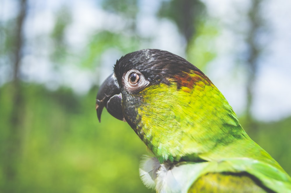 selective focus photography of green parrot