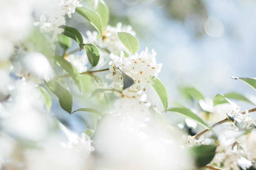 selective focus photography of white flowering tree in bloom
