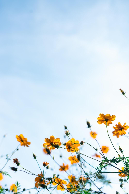 close shot of yellow flowers