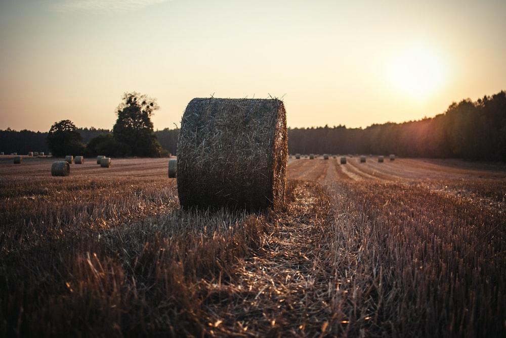 brown hay under white sky