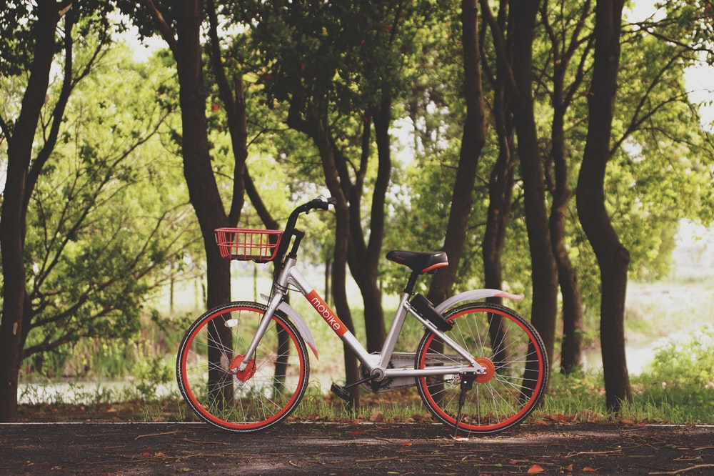 red and gray city bike near green leaf trees at daytime