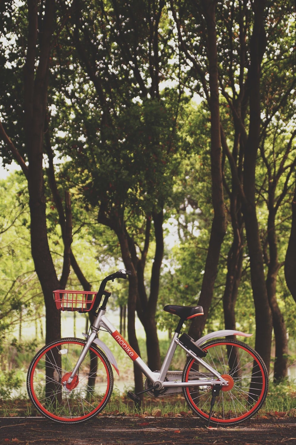 photography of bike parked near trees