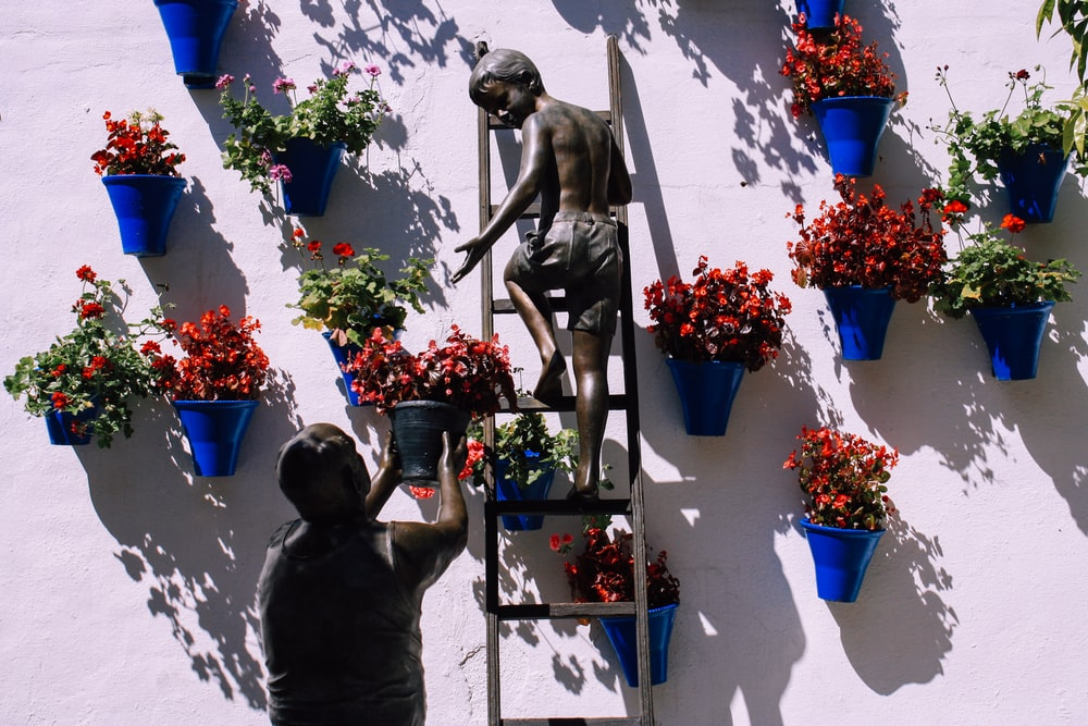 boy climbing on ladder near plant pots mounted on wall