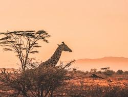Bwindi Impenetrable National Park - Lake Mburo National Park, Pirschfahrt