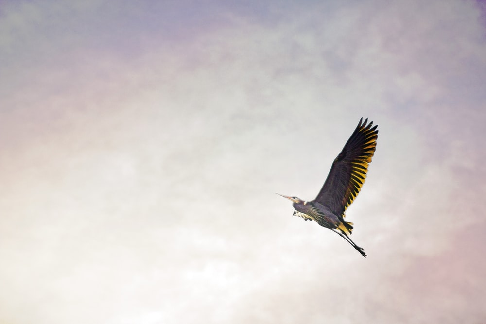 brown bird flying
