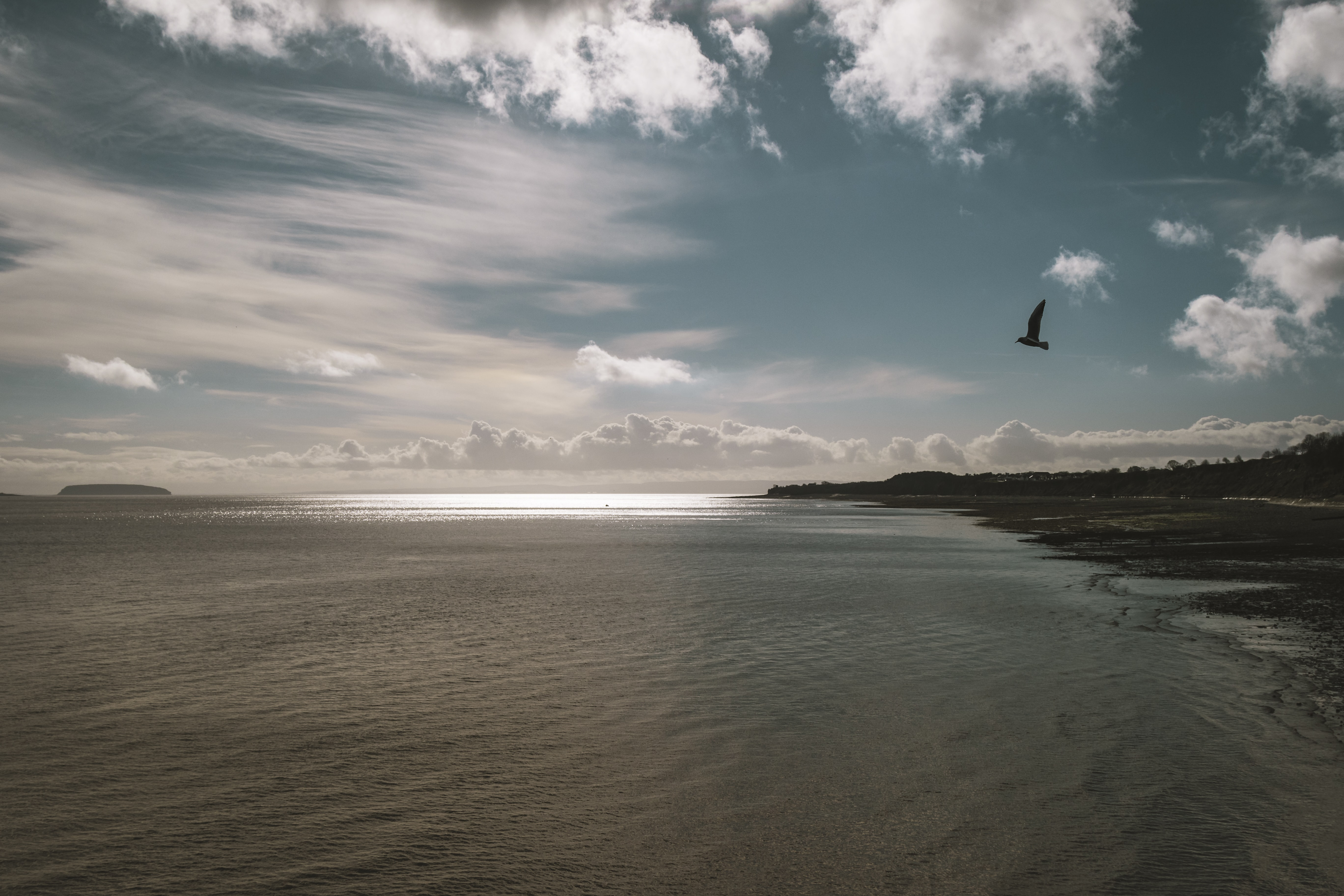 photograph of bird flying over body of water