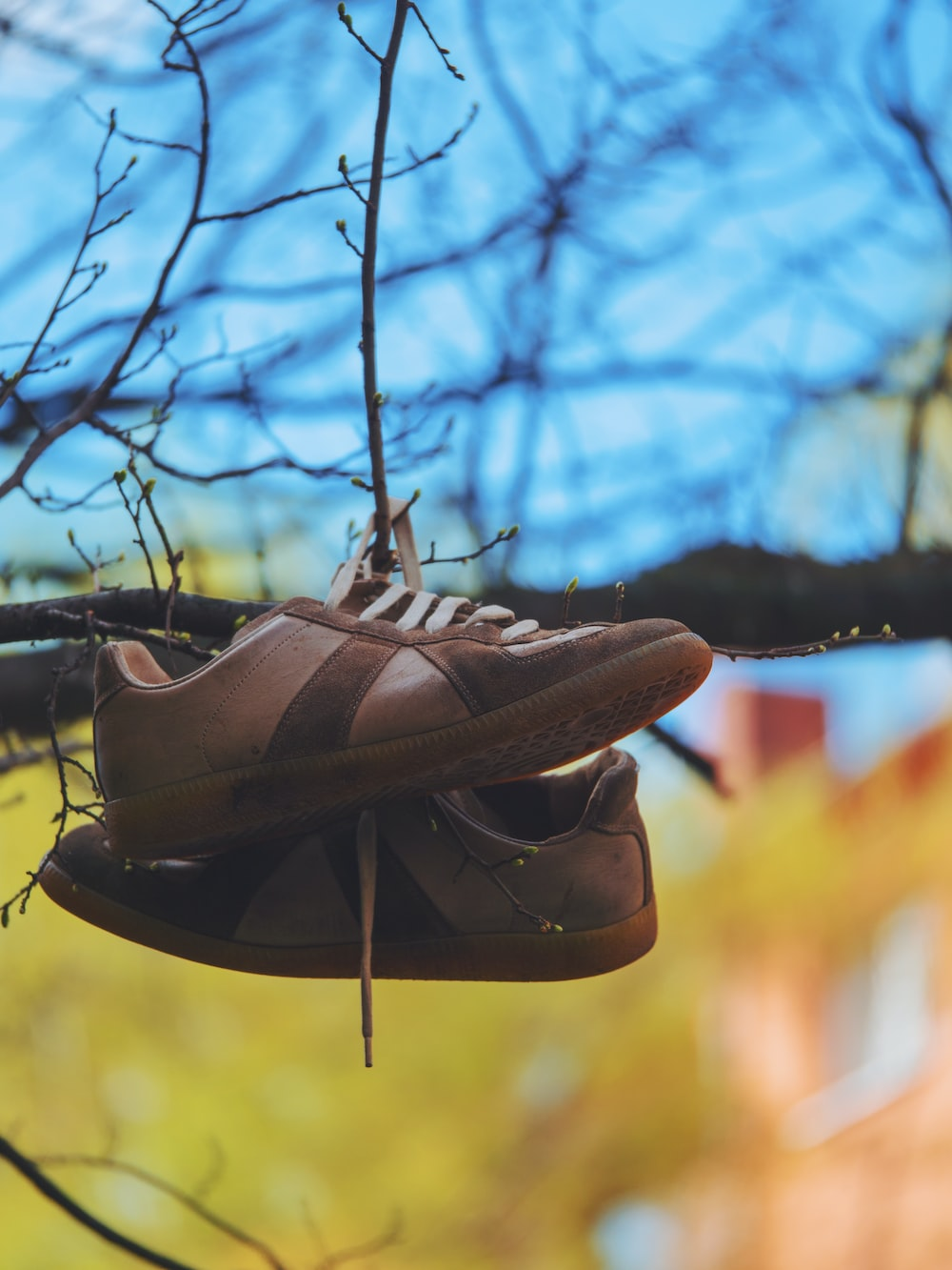 pair of low-top shoes hanging on tree branch