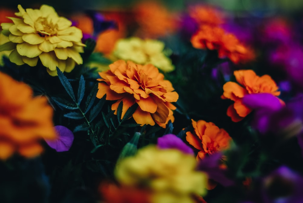 closeup photo of yellow and orange petaled flowers