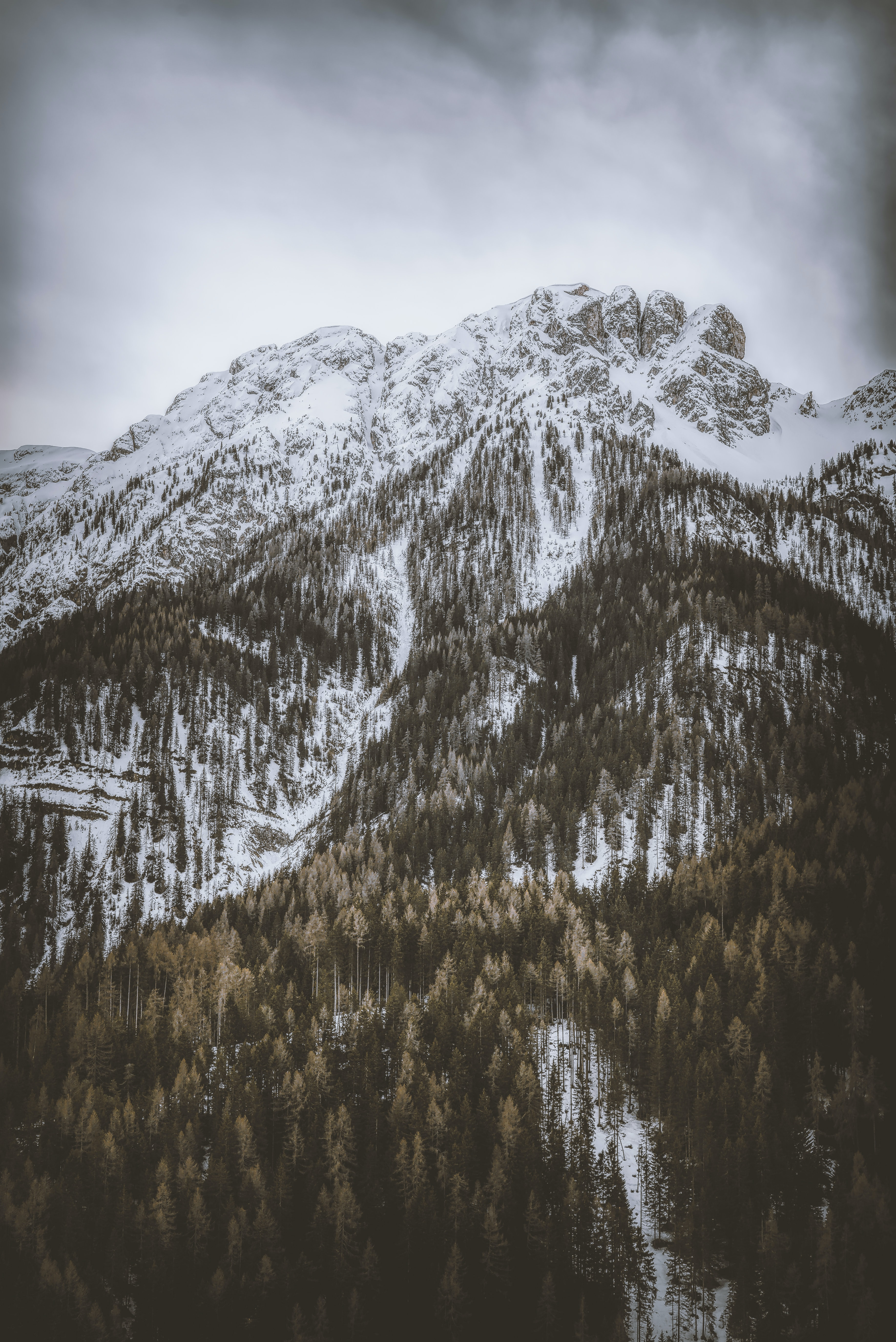 brown forest on snowy mountain