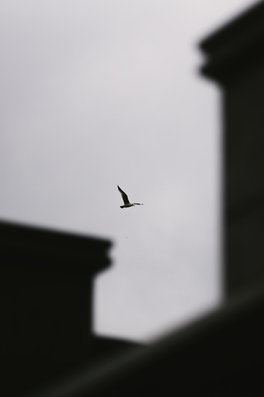 flying bird in the sky