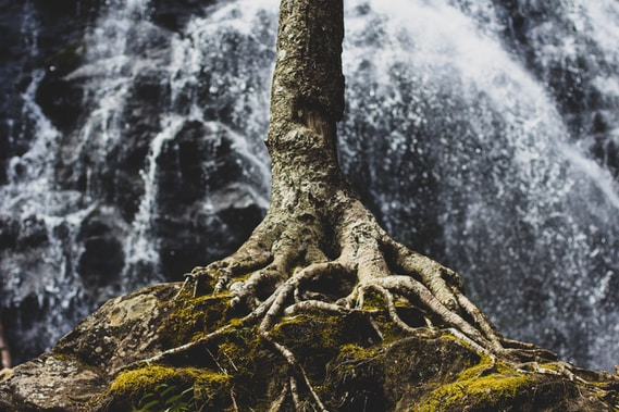 Baumwurzeln auf Felsformation
