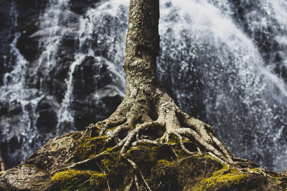 tree roots on rock formation