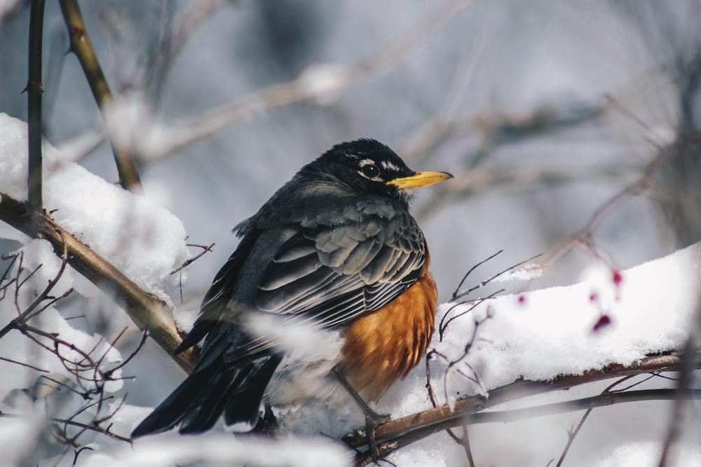 black and brown bird perching at daytime