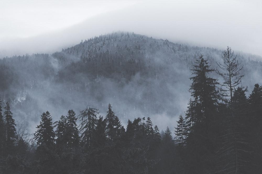 photo of green trees near mountain
