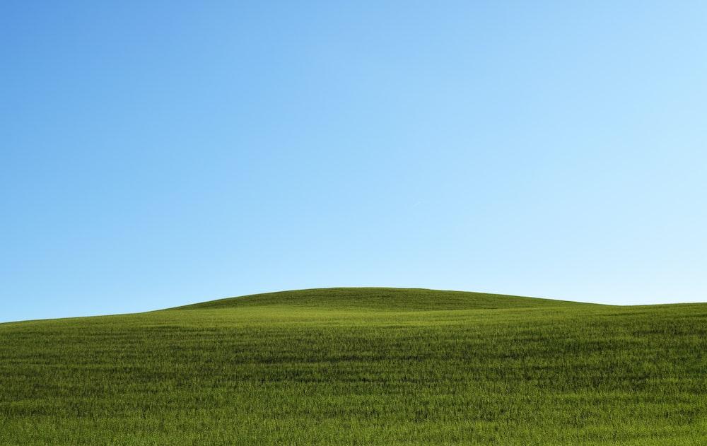 photo of green grass field