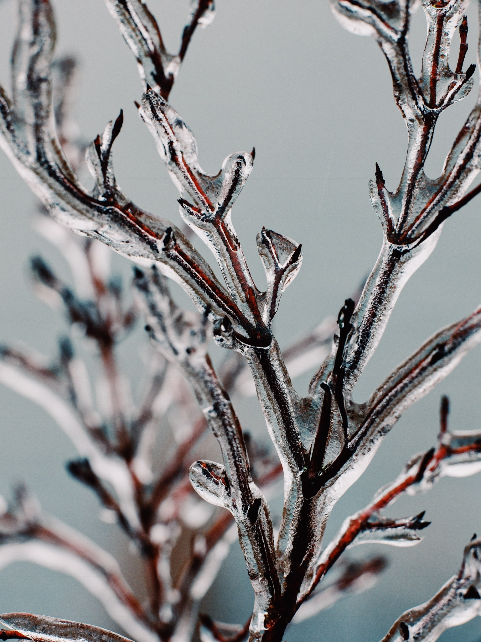 selective focus photography of frozen plant