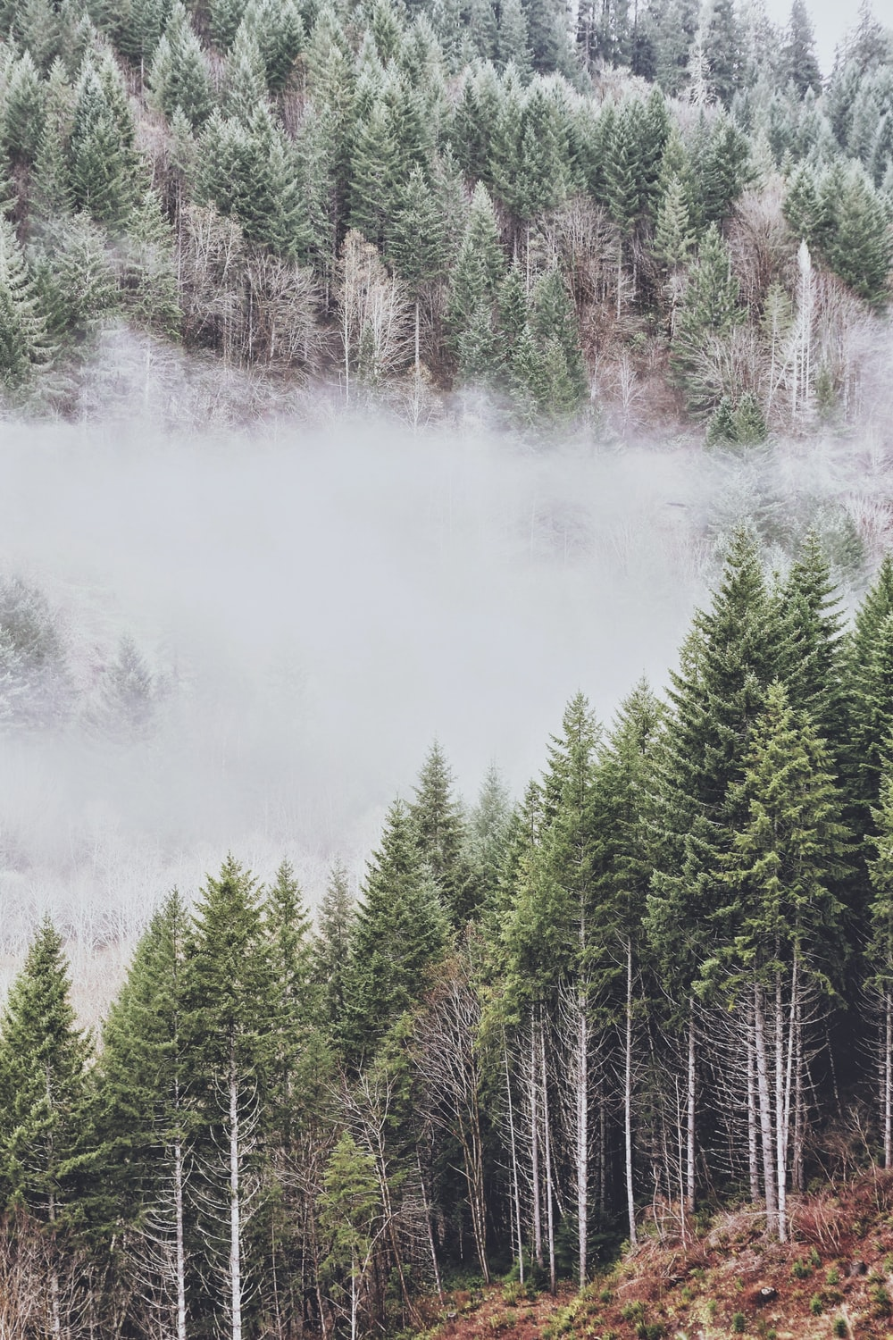 green leafed trees with smoke during day time