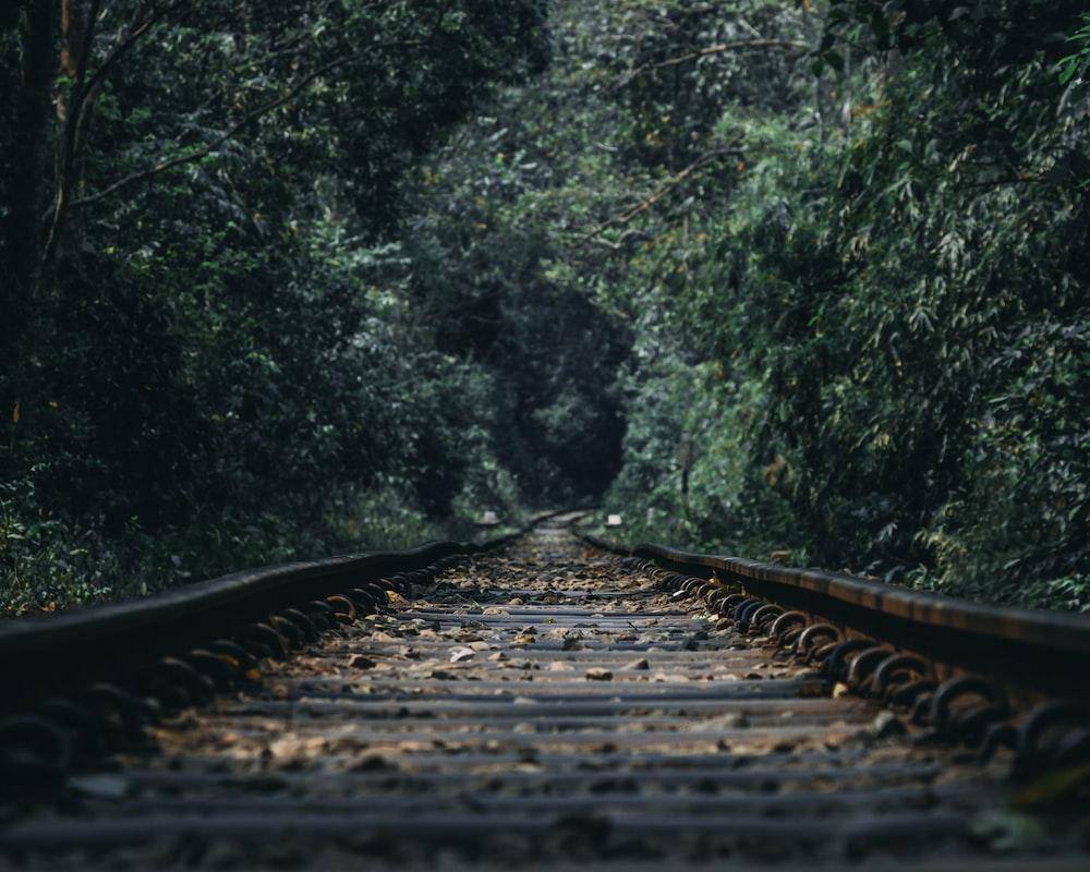 train railway between of trees