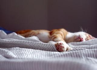 orange tabby kitten sleeping on black and white striped textile