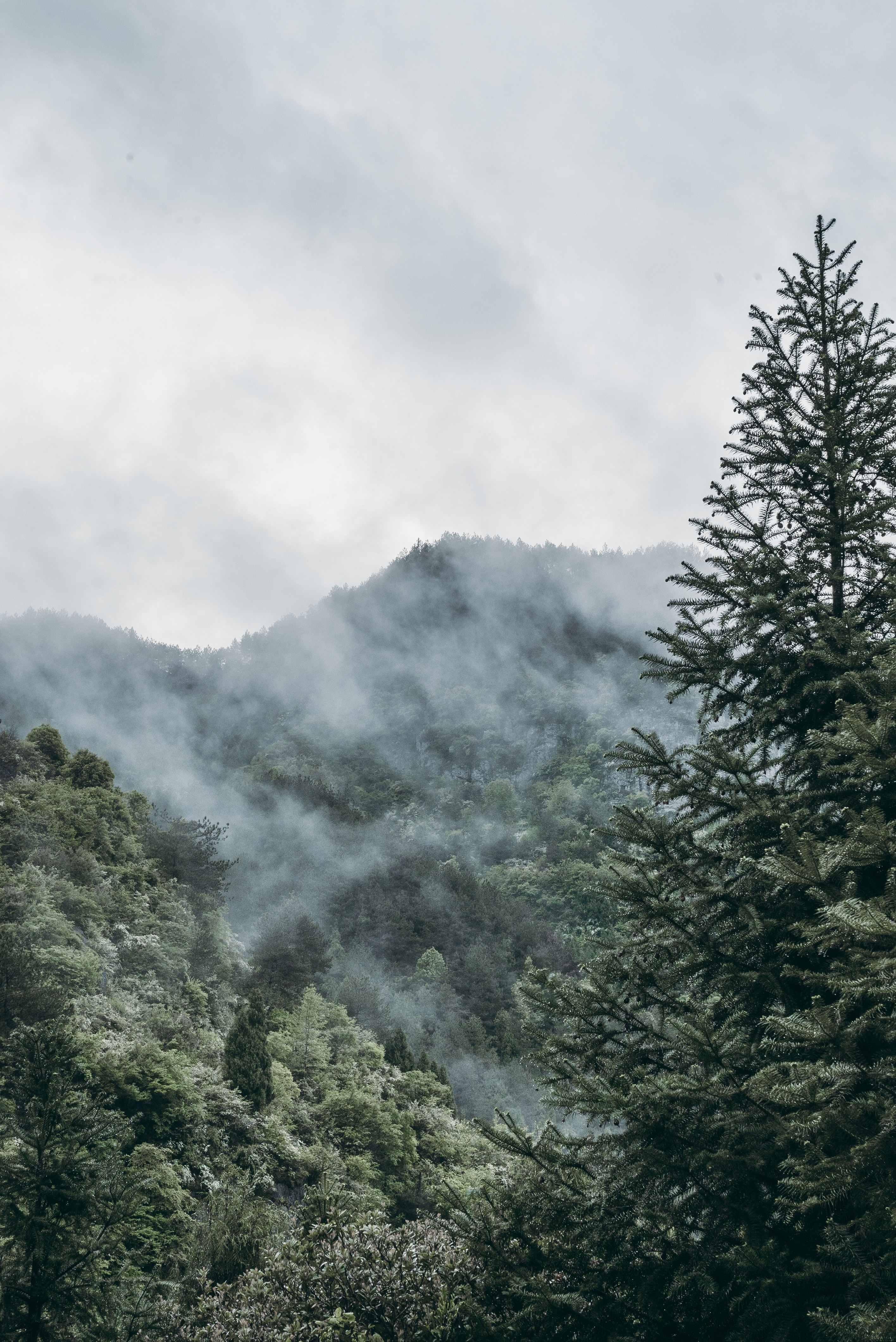 pine trees on forest with smoke at daytime