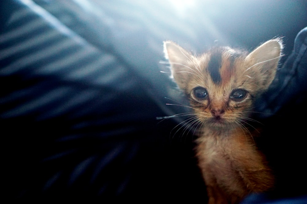 selective focus photography of calico kitten