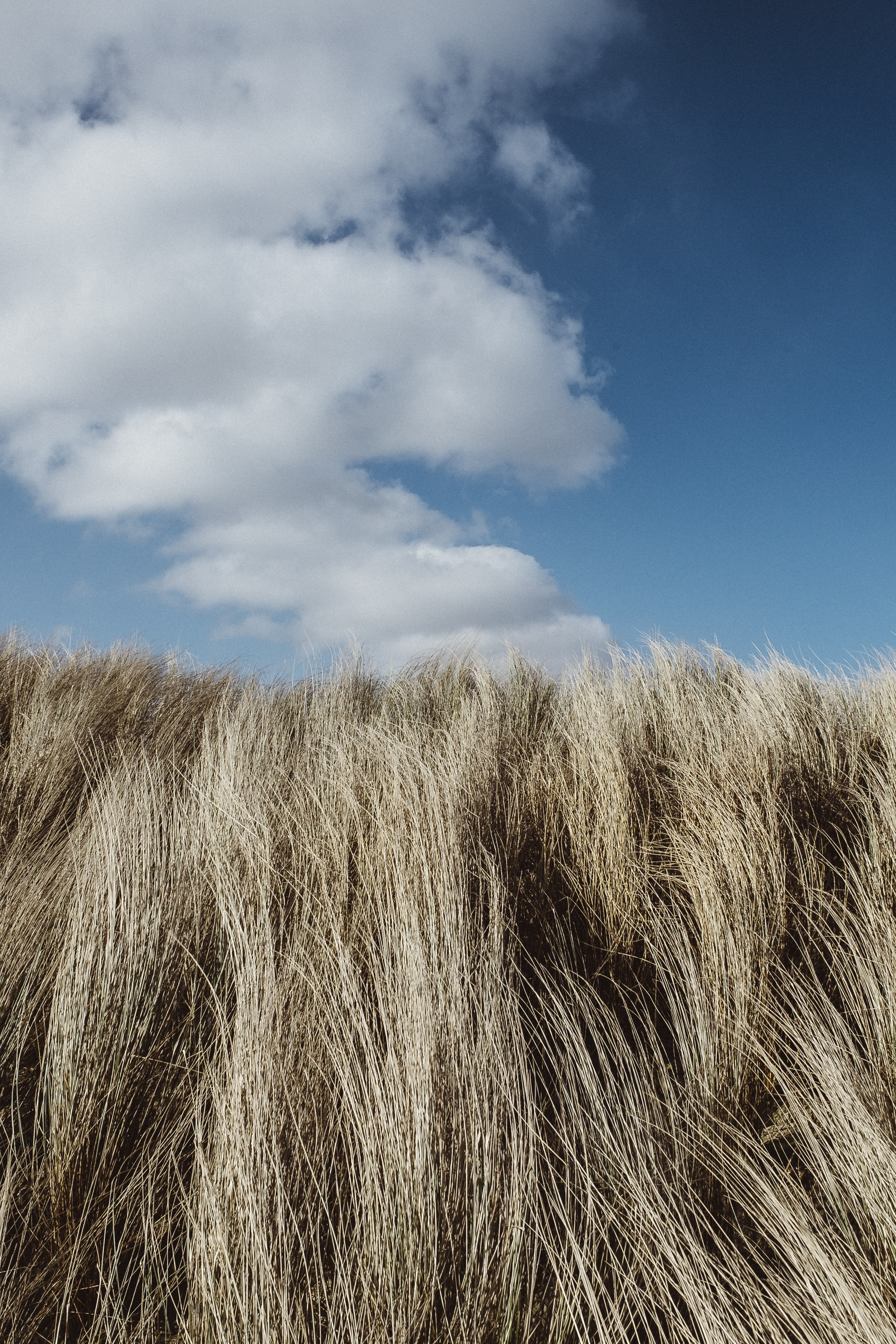 tall grass under cumulus clouds