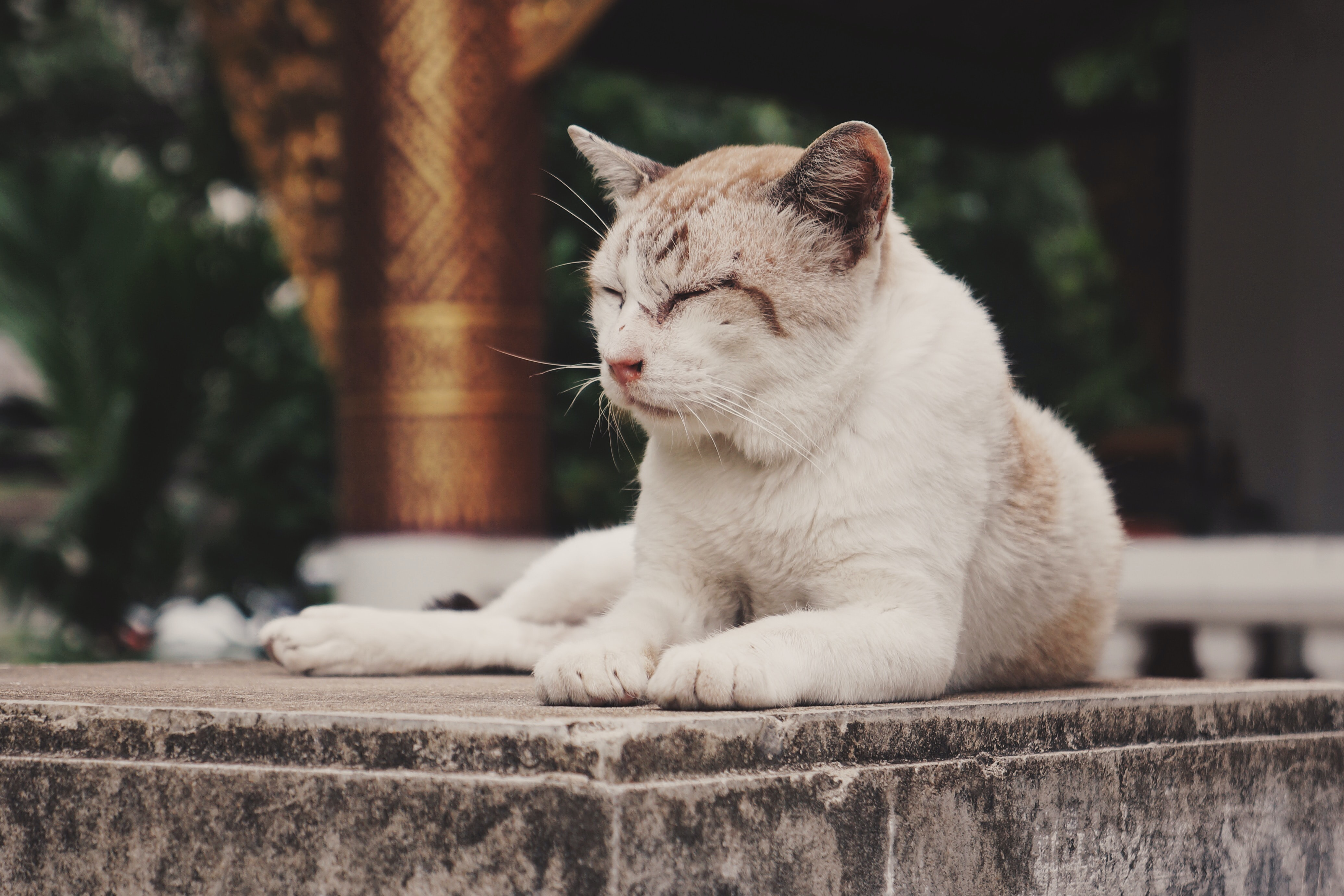 white and beige cat resting on concrete slab