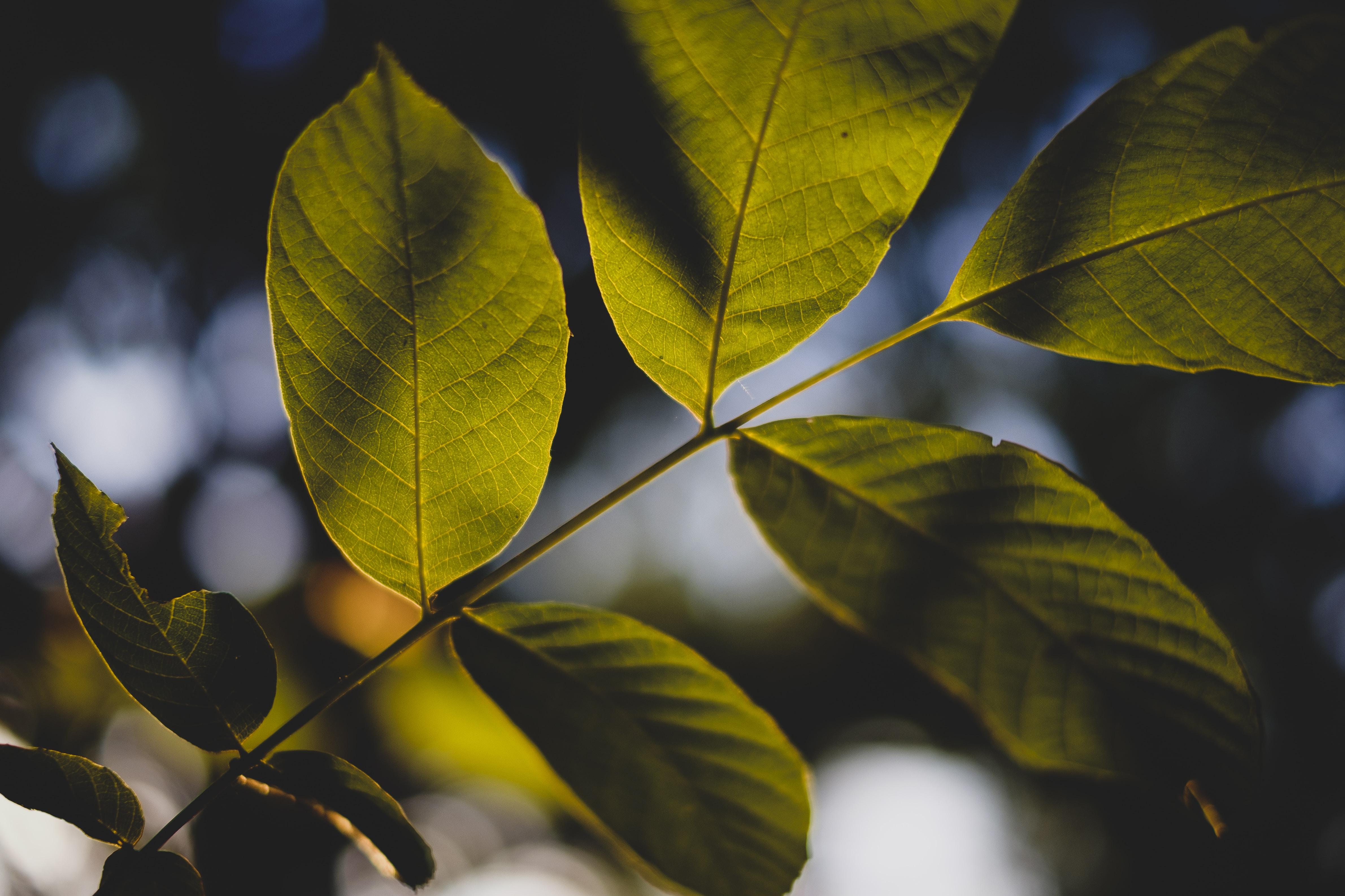 closeup photo of leaf tree