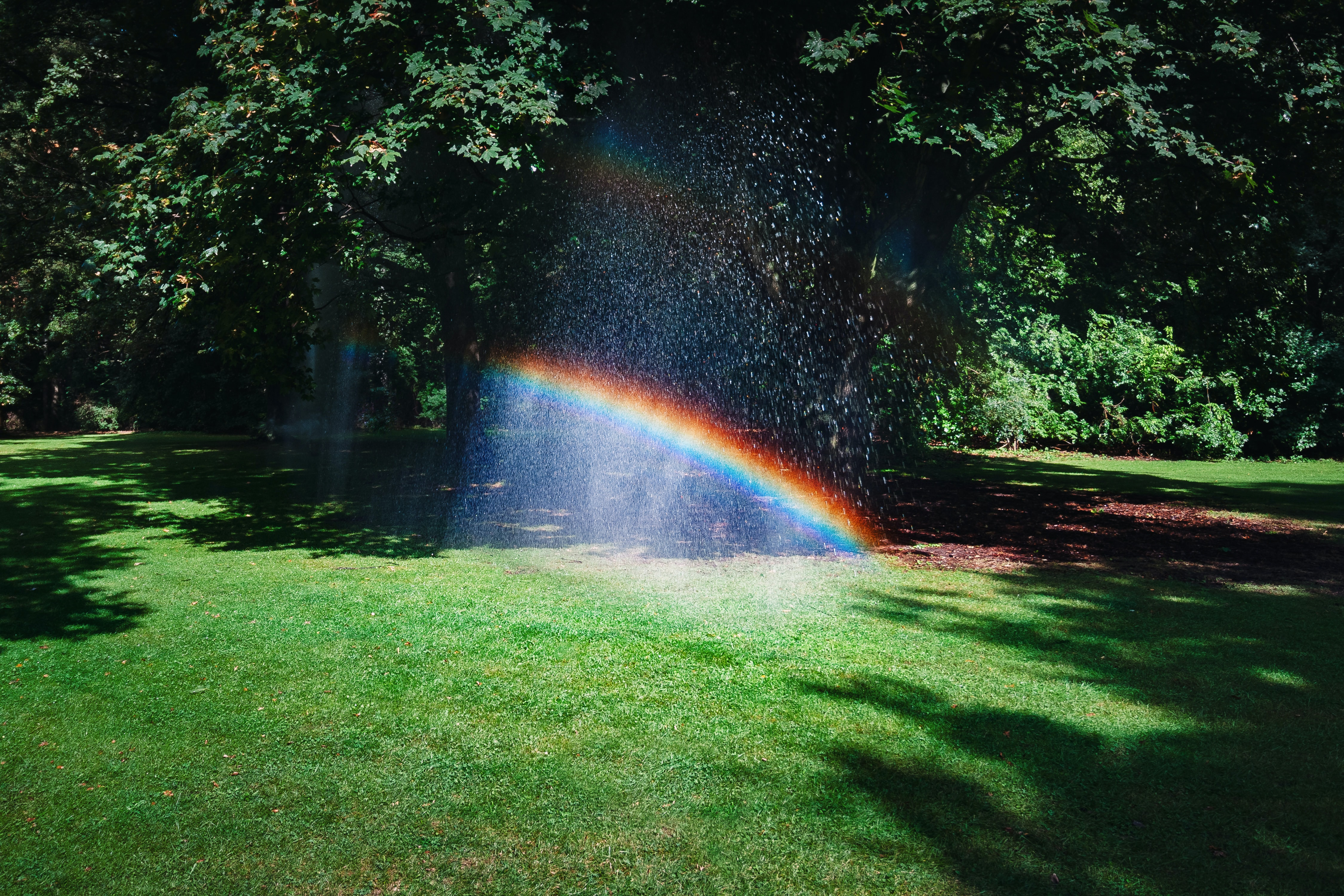 Rainbow surrounded by trees