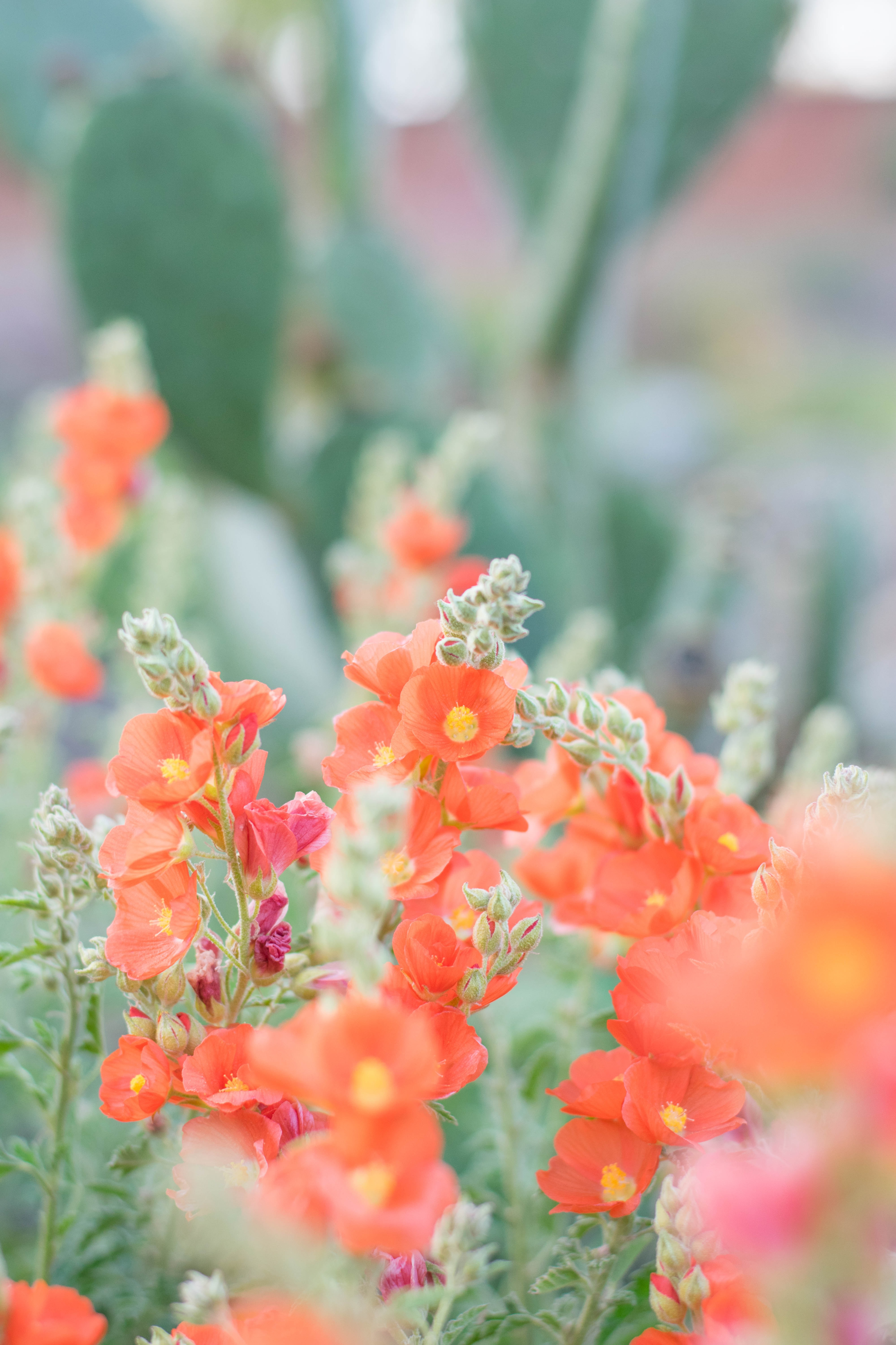 selective focus photography of orange petaled flower