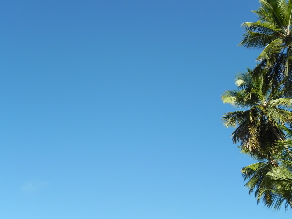 worm's-eye view photography of green coconut palms