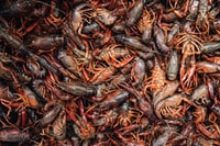 Crawfish in the spring