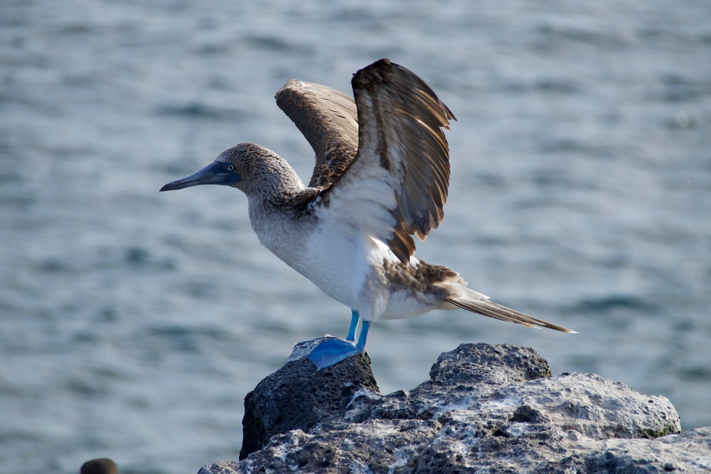 gray bird on top gray rock