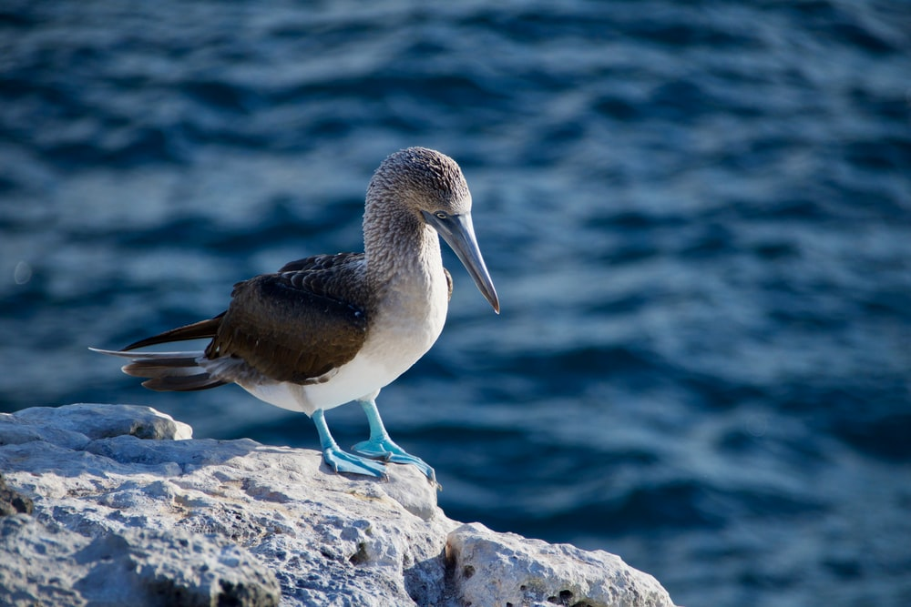 gray and white bird perched on rock formation