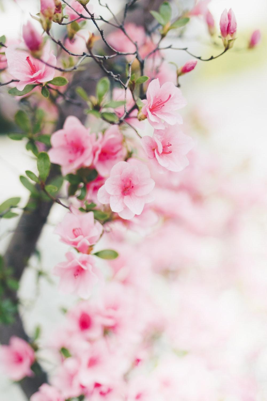 blossoms com login