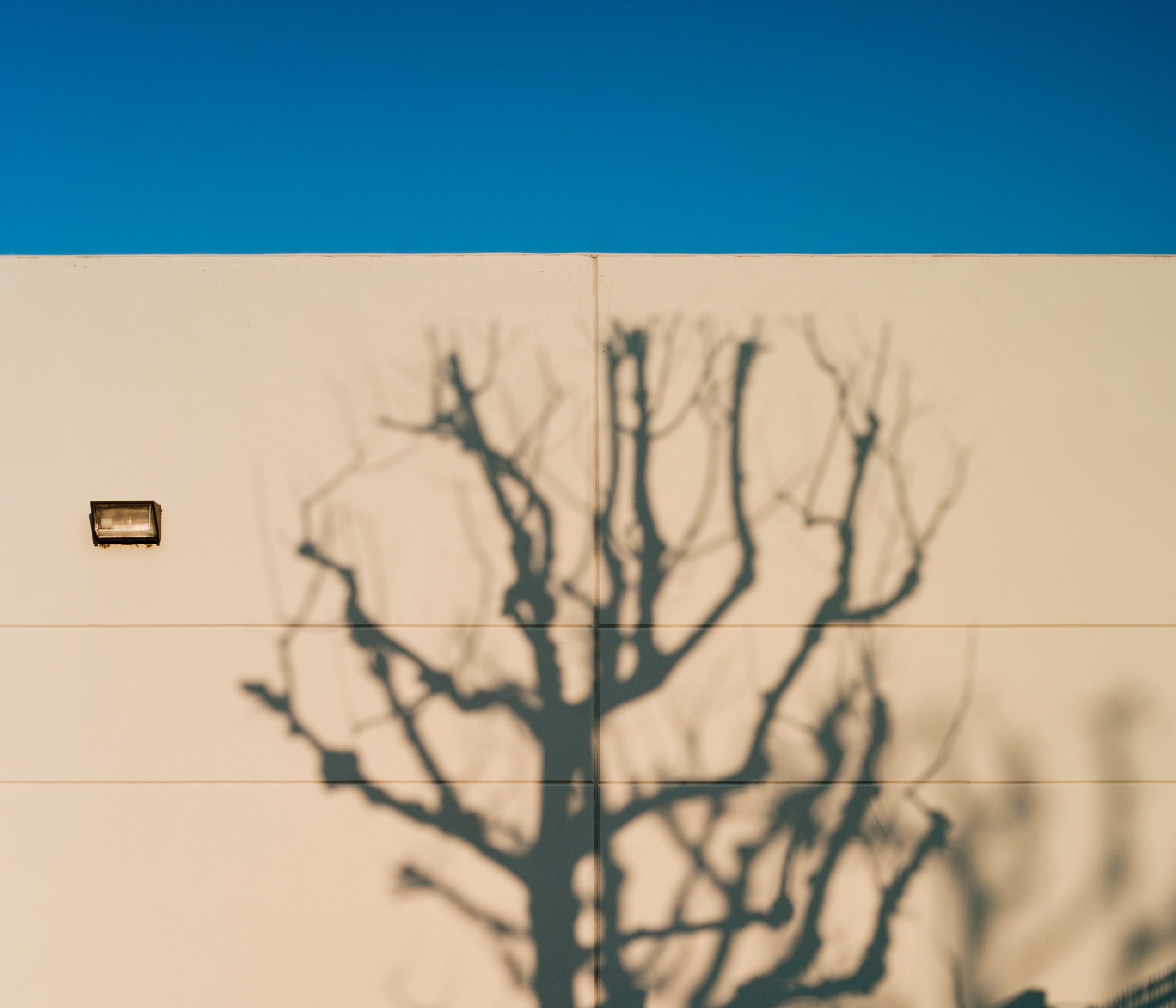 silhouette of leafless tree on beige building