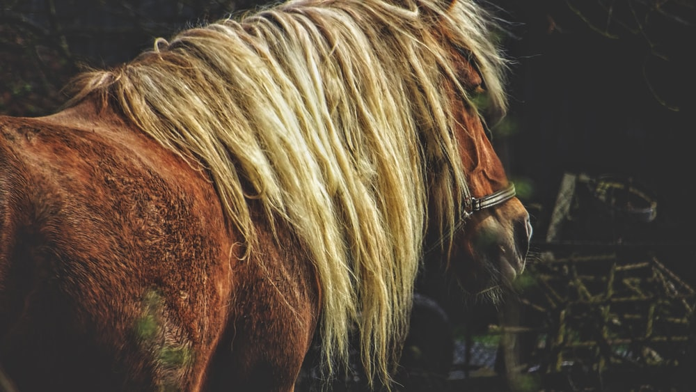 wildlife photography of horse