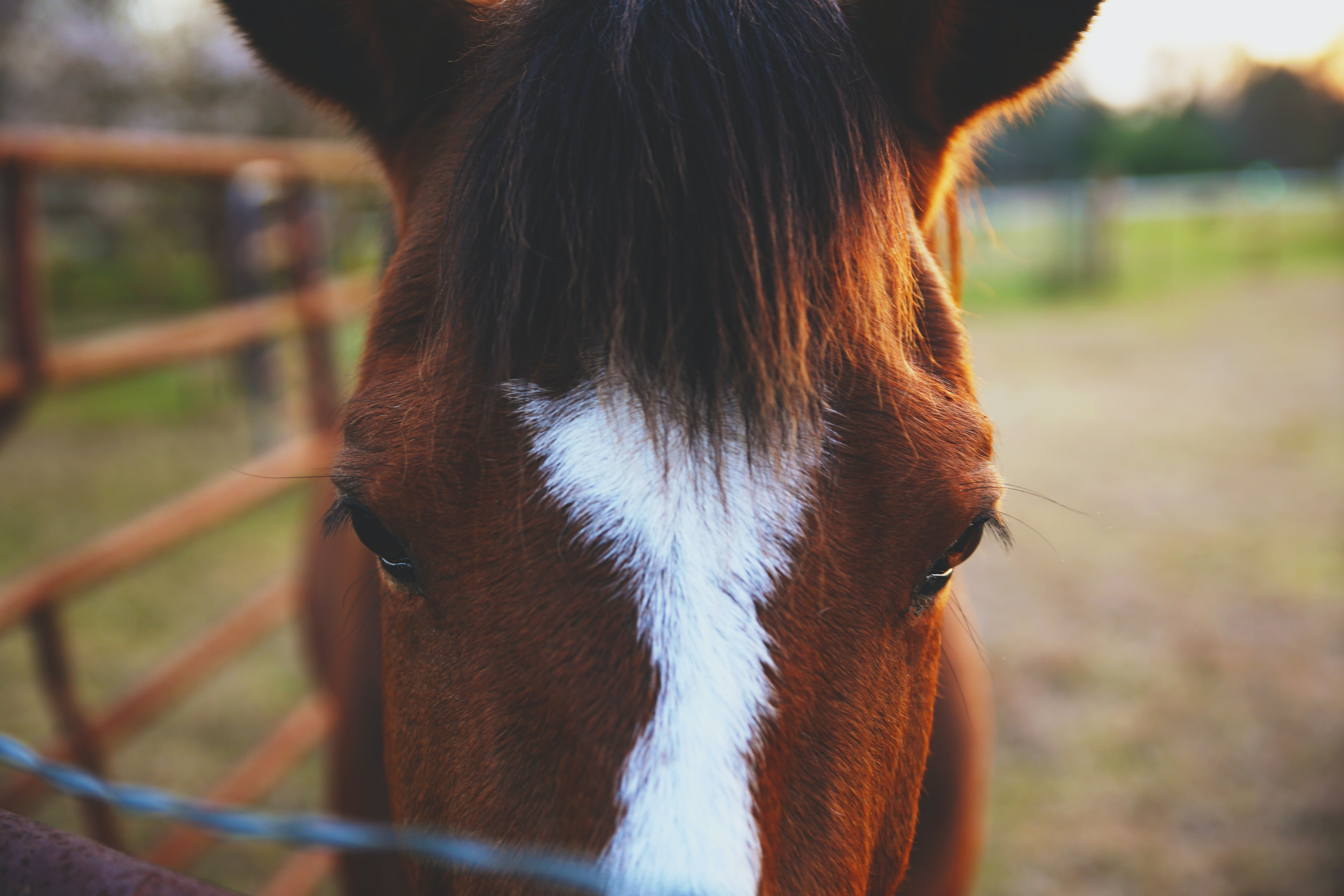 closeup photo of brown and white horse