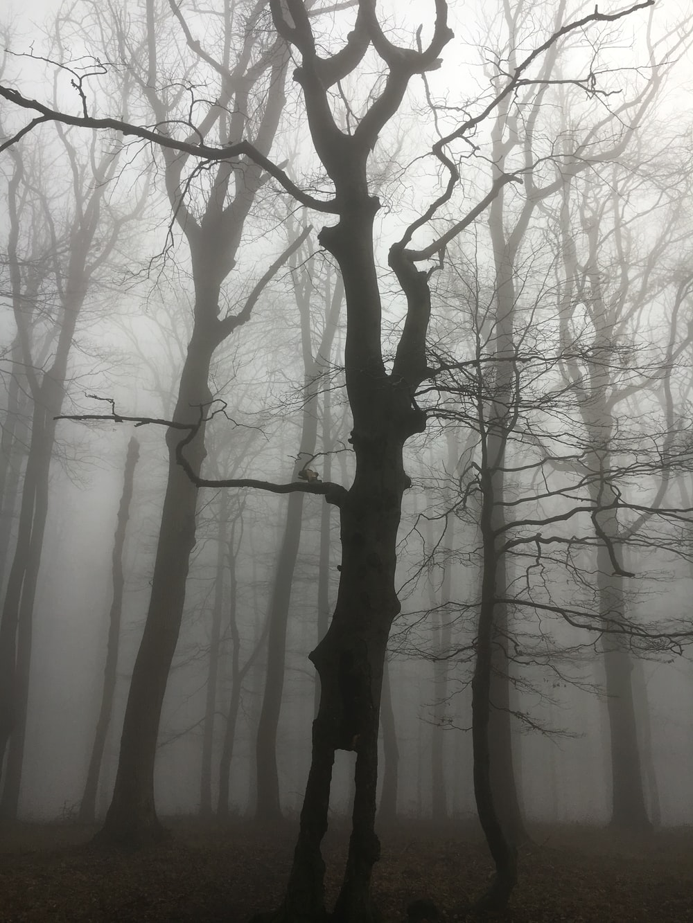 black bare tree inside a forest covered with fog